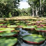 7.-Pamplemousses-Garden