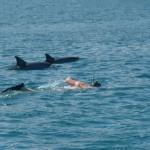 4.-Swim-with-dophins
